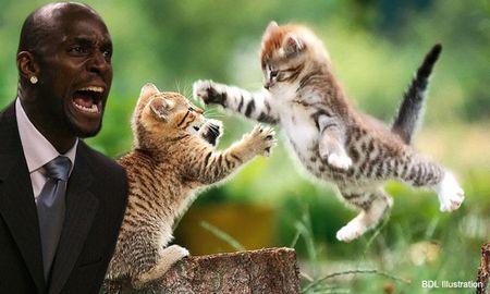 Garnett kittens